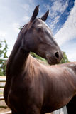 Horse. A horse against a blue sky royalty free stock photos
