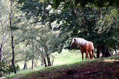 Horse. A brown horse with bright manes in the woods royalty free stock photography