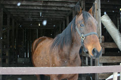 Horse. Standing alone in the barn royalty free stock image
