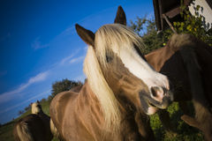 Horse. On a farm in summer Royalty Free Stock Photos