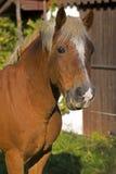 Horse. On a farm in summer Stock Photos