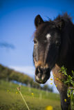 Horse. On a farm in summer Stock Photography