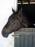 Horse. Head Stock Photos