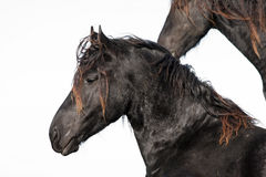 Horse. Beautiful dark horse, against bright sky Royalty Free Stock Photography