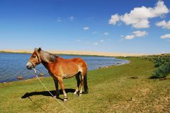 The horse Royalty Free Stock Photos