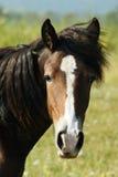 Horse. Head horse illuminated by light Stock Photos