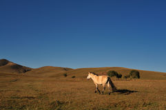 Horse. Chinese grasslands of Inner Mongolia horses free Stock Photo