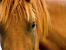 Horse-7249 Royalty Free Stock Images