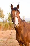 Horse. In a farm of beijing Royalty Free Stock Images