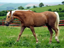 Horse. On farm Stock Photos