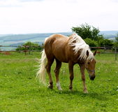 Horse. On farm Stock Photography