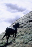 Horse. Black horse on the field Stock Image