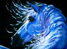 Horse. White horse in night time acrylic painted.Picture I have created myself Stock Image