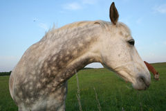 Horse. Looking back royalty free stock images