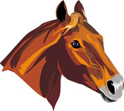 Horse. Vector drawing of a head of a red horse Royalty Free Stock Photography
