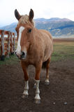 Horse. A horse at the ranch in Patagonia Royalty Free Stock Photo