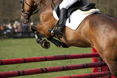 Horse. Brown horse in a showjumping event Royalty Free Stock Photo