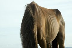 Horse. With no head Royalty Free Stock Images
