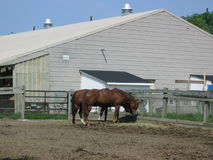 Horse. On farmh Stock Photography