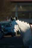 Horse. Beautiful horse jumping the barrier at the equestrian events royalty free stock images
