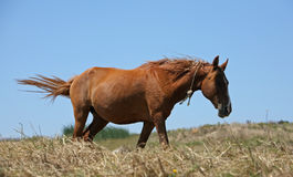 Horse. In the farm Stock Photography