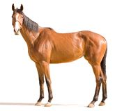 Horse. Golden horse on a white background Royalty Free Stock Images