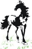 Horse. An original pen and ink illustration of horse on the green meadow Royalty Free Stock Photo