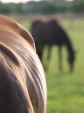 Horse Abstract Royalty Free Stock Photos