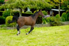 Horse in action royalty free stock photos