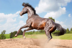 Horse in action on blue sky background Stock Image