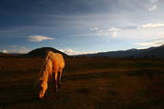 Horse in afterglow Royalty Free Stock Photos