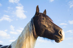 Horse against the blue sky Royalty Free Stock Images