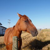 Horse Against A Prairie Sky Stock Image