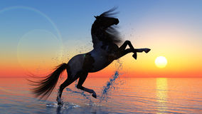 Horse against a sunset Royalty Free Stock Images
