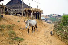 Horse at Akha Village, Pongsali, Laos Royalty Free Stock Photography