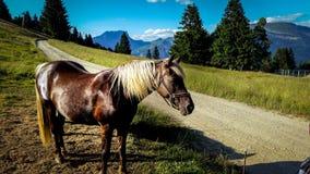 Horse in the alps stock photos