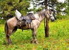 Horse at Altai mountains Stock Photos