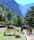 Horse ambulance. This horses are used as ambulance in Samaria gorge Stock Photos