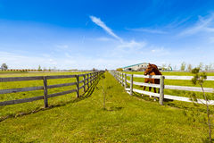 Horse on american country Royalty Free Stock Image