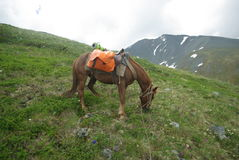 Free Horse Among Green Grass In Nature. Brown Horse. Grazing Horses In The Village Stock Photography - 82251382