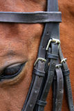 Horse And Bridle Stock Images