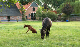 Horse And Foal. Stock Images