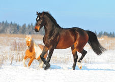 Free Horse And Pony Play Together Royalty Free Stock Photos - 22535438