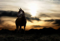 Free Horse And Sunset Stock Photography - 3447582