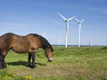 Horse And Wind Turbines Stock Photography
