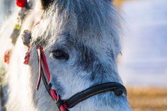 Horse animal face Stock Image