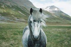 Horse, Animal, Green, Field, Farm Stock Photos
