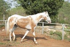 Horse. Animal Mammal Farm Nature Royalty Free Stock Photos