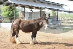 Horse. Animal mammals farm field Stock Photo