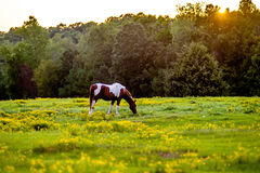 Horse animal posing on a farmland at sunset Stock Photo